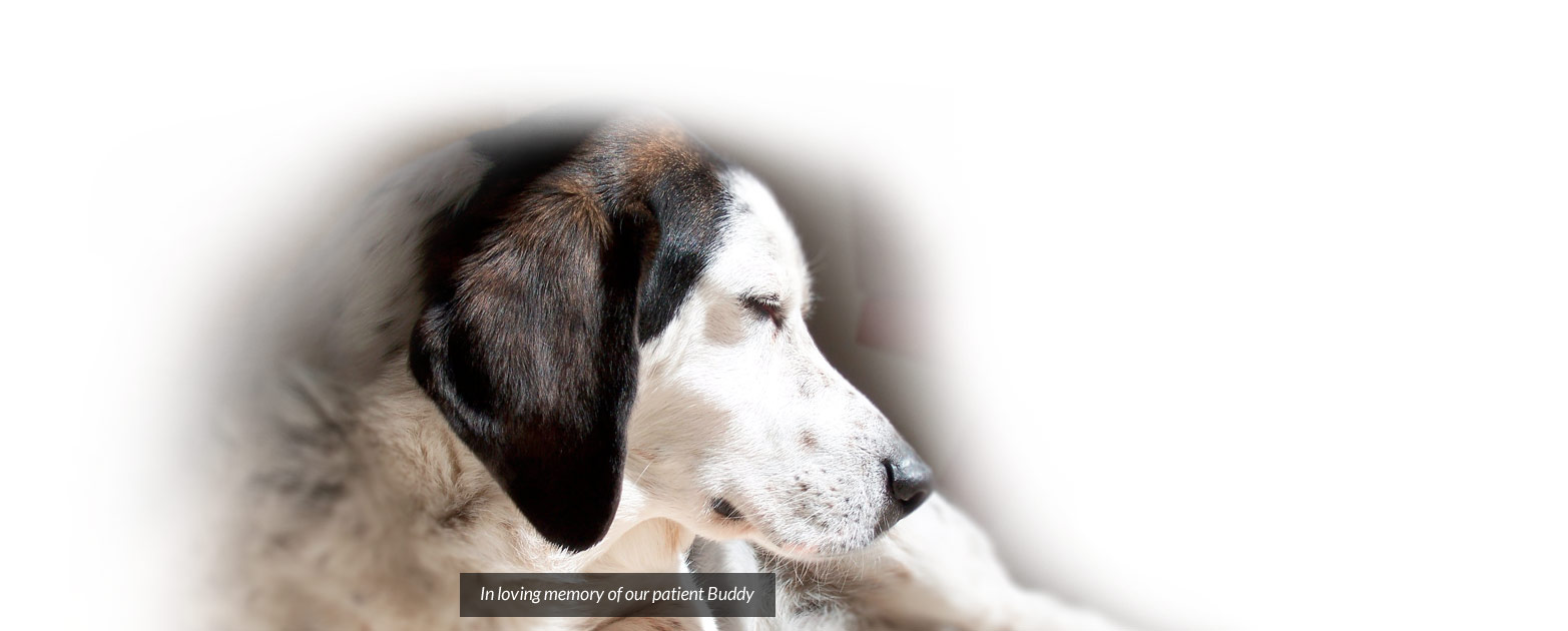 In loving memory of our patient Buddy