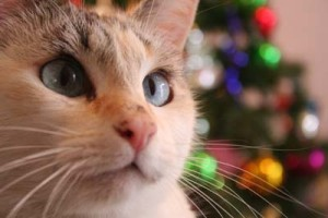 MN Pets heartwork of the holidays